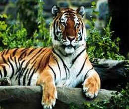 two year old tigress found dead in panna tiger reserve