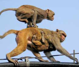 monkey creates chaos in haryana assembly