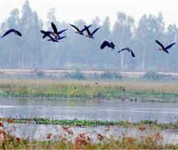 migratory birds is coming in sitapur