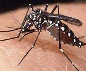 98 fresh cases of dengue in a week