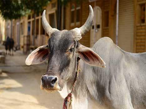 story of bhakt sadan prebirth story