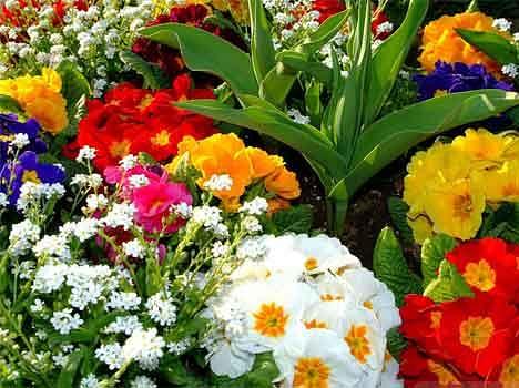 फूलों से सजाएं अपनी किस्मत