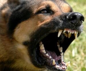 Terror of killer dogs in Bareilly; DM to analyse the situation