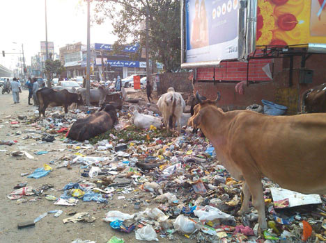 Pictures of delhi send on aap's whatsapp number.
