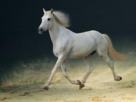 Auspicious Sign Of Horse - जब राह में ऐसे दिख जाए घोड़ा तो होगा बड़ा लाभ - Amar Ujala Hindi News Live
