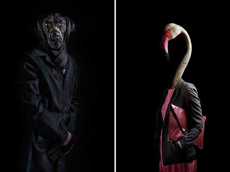 when animals gets dressed in human clothing