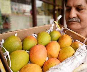 Alphonso Mango Is The Costliest Mango Of India - देख
