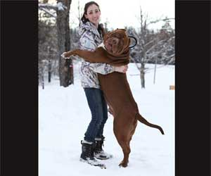 largest pitbull in the world