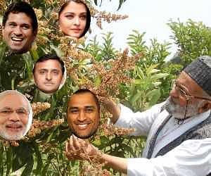 kalimulla grow mango on celebrities name