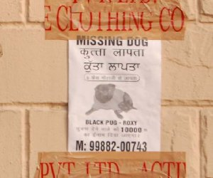 dog missing, found and win ten thousand reward