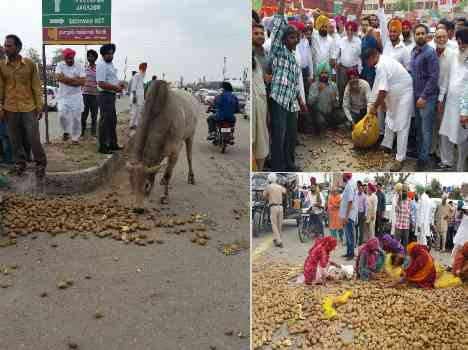 congress protest against low price of potato