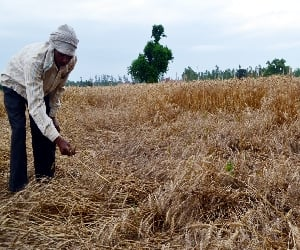 Farmers will wear off baisakhi