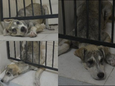 cruel behaviour with dog, horrible pics