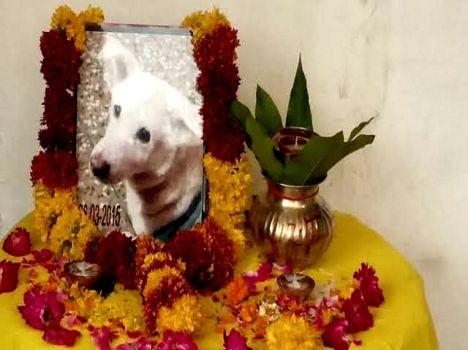 death rituals of fulpi dogi