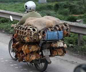 strange things that fit on scooters in vietnam