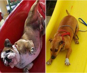 dogs enjoying on slides