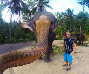 elephant snapped its own selfie