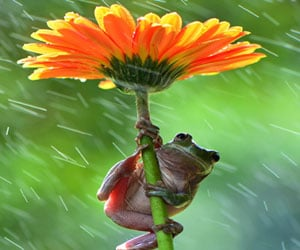frogs taking shed under flowers,