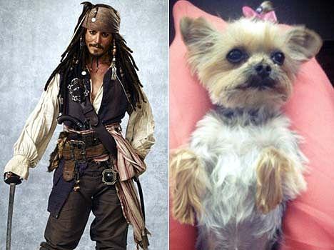 Johnny Depp's Dogs in Australia