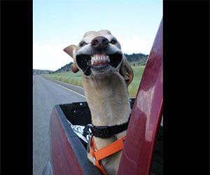 dog enjoying the wind