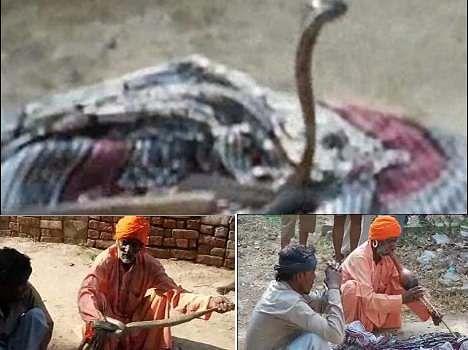 snake love story in haryana village