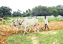 national agriculture market for farmers