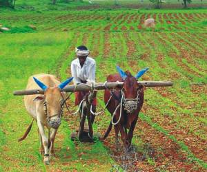 farmers can sell there garins via online