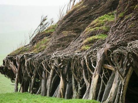 earth windiest place earth