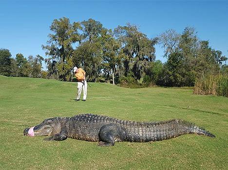 Gator Squad caught alligator