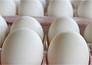 खुलासा: अंडे अब पहले जैसी ताकत देने वाले नहीं रहे