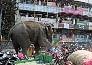 मॉल में घुसा हाथी, कर दिया तहस-नहस, देखें तस्वीरें