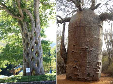 photos of amazing trees from around the world