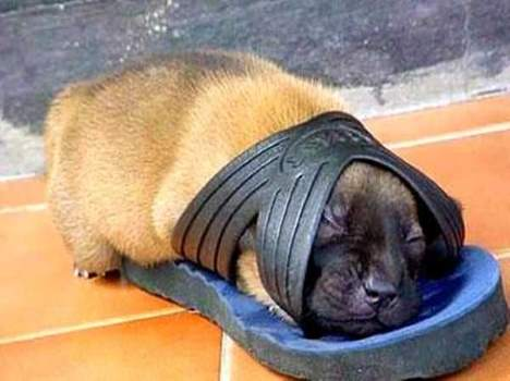 dogs also sleep anywhere