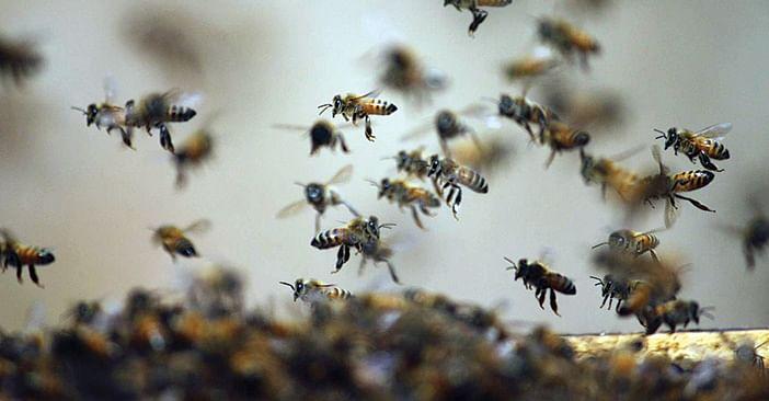 खेतों में काम रहे 3 लोगों पर मधुमक्खियों ने किया हमला, एक की मौत