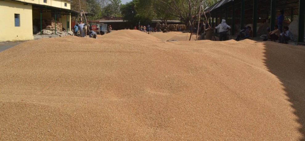 Wheat, rice will be distributed to the poor delay
