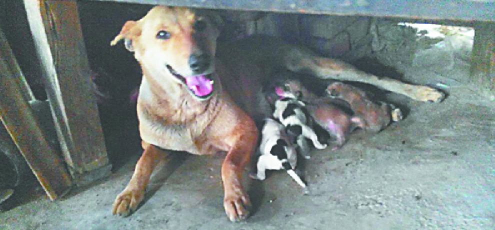 Female Dog Became Mother After Vasectomy In Gurgaon