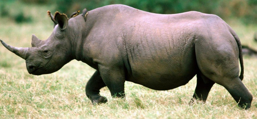Rhinos killed in clashes