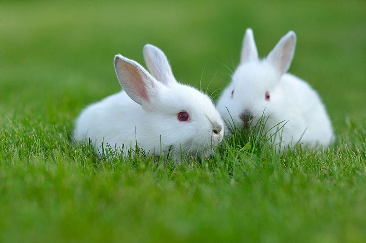 जानवरों पर साबुन के परीक्षण पर रोक