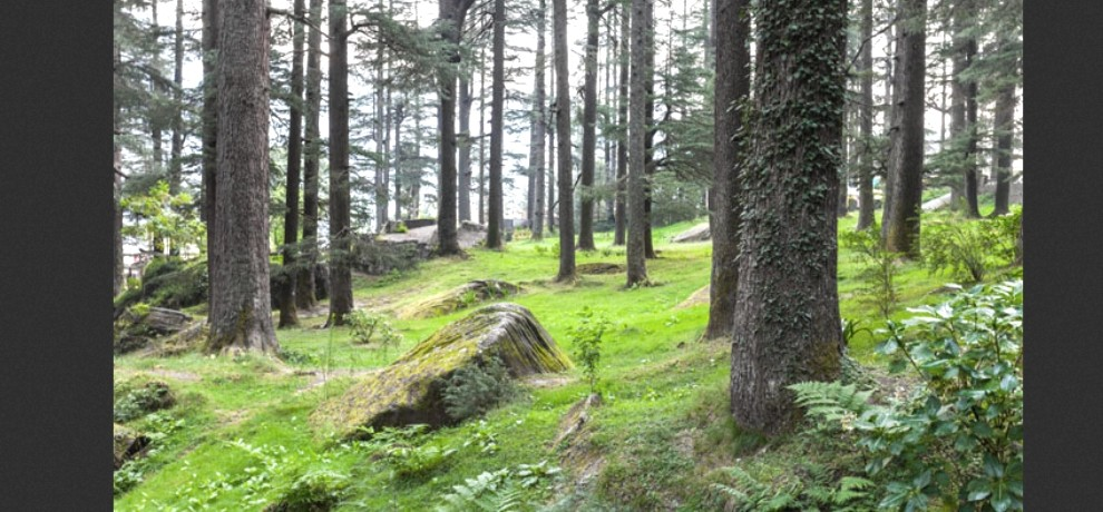 save forest in hindi Free essays on save environment in hindi language get help with your writing 1 through 30.