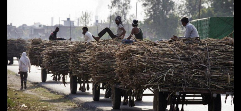 Less acreage of sugarcane plantation