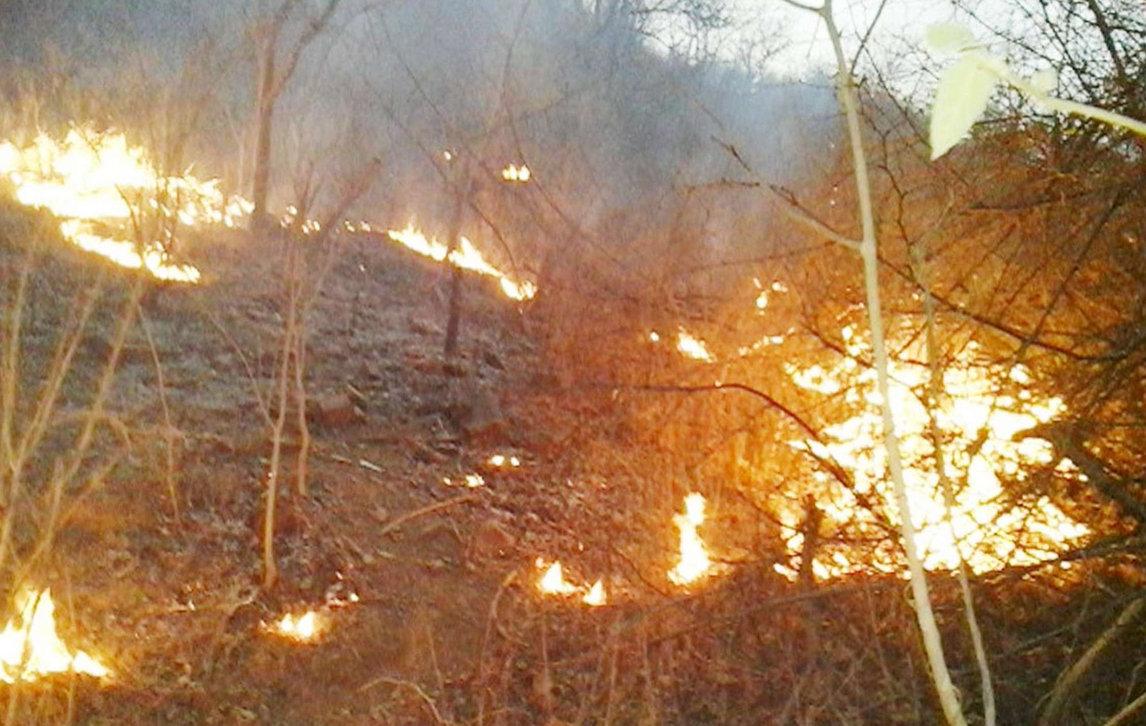 forest  caught fire during  Mock Drills  in haridwar