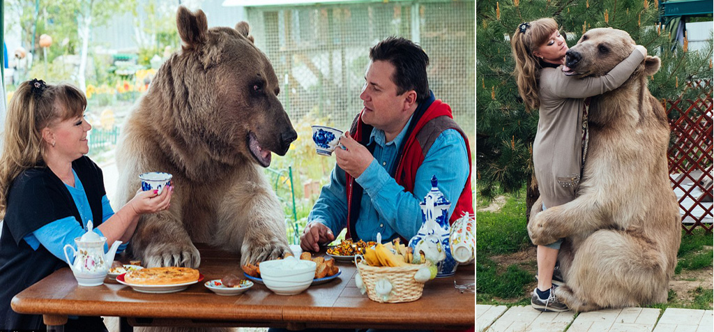 This Russian family have a bear just like Mowgli's Friend Baloo