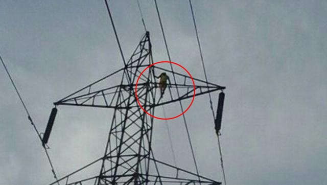 jharkhand: woman climbs on electricity tower to marry her lover
