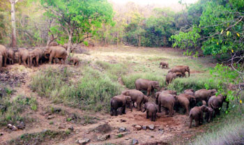 short documentary on elephant by mike h pandey name as the last migration