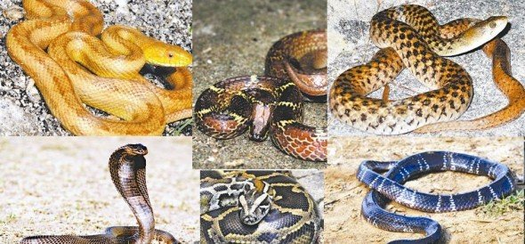 monsoon alert in summer season, six type of dangerous snakes get off from the ground