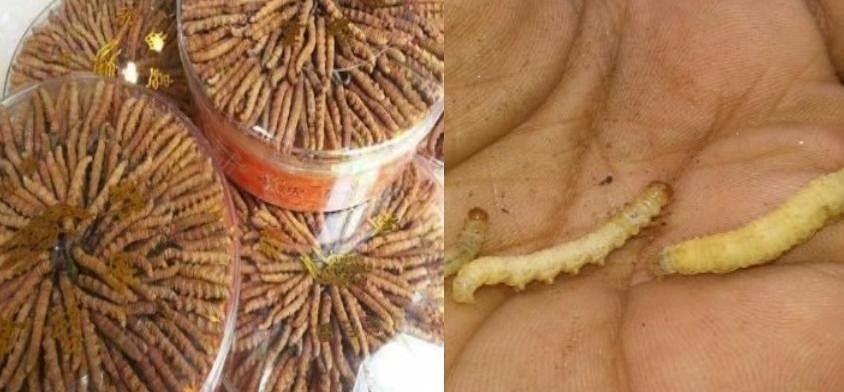 Image result for Himalayan Viagra