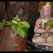 not only belpatra this five leaf are very auspicious in shiv puja