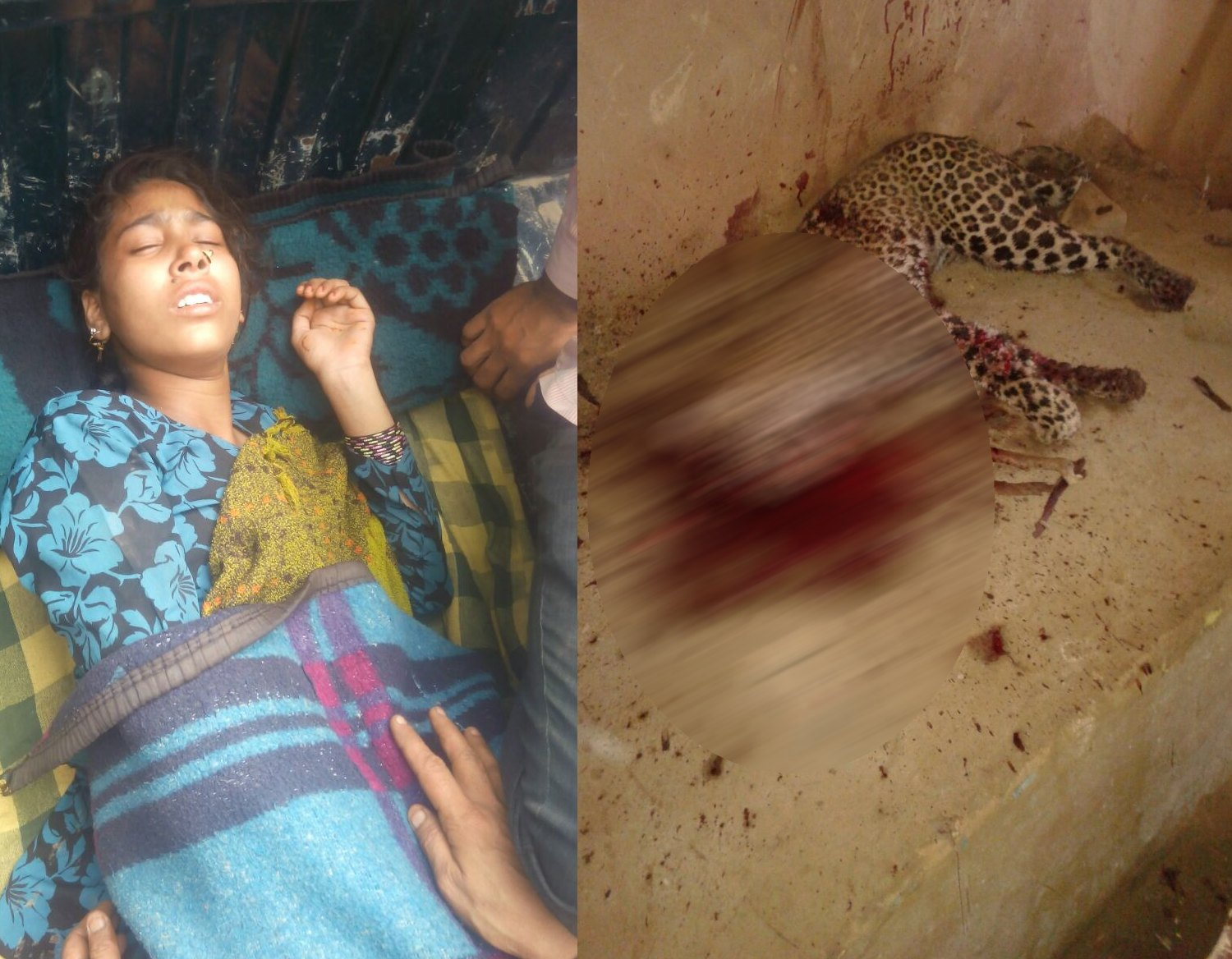 woman killed leopard