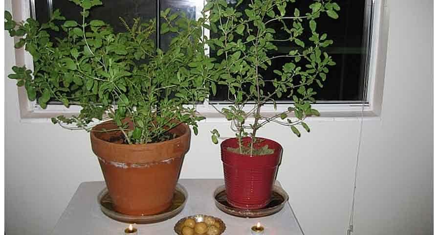 देवउठनी एकादशी के दिन तुलसी के पौधे पर एक घी का दीपक जरूर जलाएं।