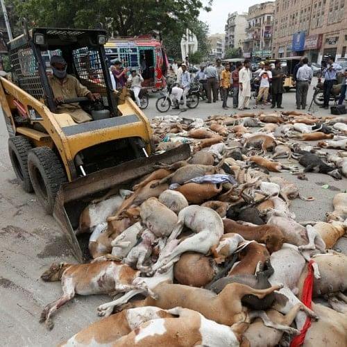 पाकिस्तान की सड़कों पर पड़ी हैं कुत्तों की लाशें